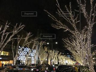 ライトアップ,クリスマス,表参道