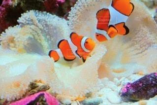 魚,水族館,水中,クマノミ,コーラル,海洋生物学