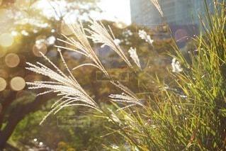 風景,秋,屋外,草,草木