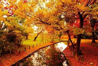公園,秋,紅葉,屋外,散歩,池,オレンジ