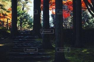 公園,秋,紅葉,森林,屋外,階段,葉っぱ,葉,もみじ,草,樹木,草木