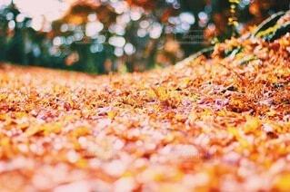 自然,秋,紅葉,森林,もみじ,落ち葉,玉ボケ,絨毯,落葉,カエデ,じゅうたん,玉ぼけ