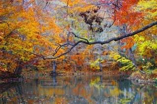 湖に映る紅葉の写真・画像素材[4922230]