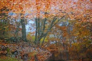 自然,風景,秋,紅葉,屋外,水面,葉,もみじ,池,反射,オレンジ,樹木,リフレクション,落葉,カエデ