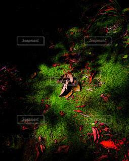 森の中の小さな秋の写真・画像素材[4925579]