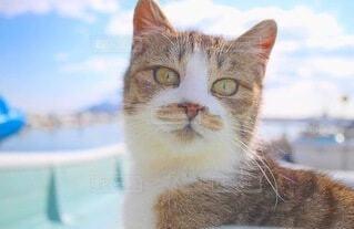 猫,海,空,動物,かわいい,ボート,船,景色,ねこ,座る,可愛い,昼,野良猫,見つめる,カメラ目線,キュート,日中,のらねこ,ネコ