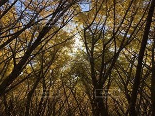 空,秋,森林,屋外,樹木,イチョウ,落葉,草木