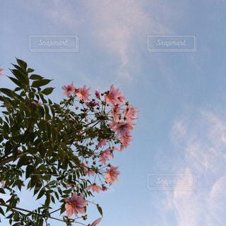 空の写真・画像素材[244540]