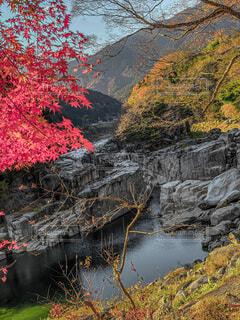 自然,風景,秋,紅葉,屋外,水面,山,景色,樹木
