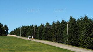 自然,空,木,屋外,森,青空,北海道,山,草,丘,樹木,新緑,ゴルフ,日中,モエレ沼公園