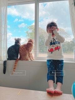犬,風景,動物,屋内,窓
