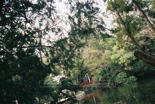 自然,風景,空,屋外,湖,川,水面,樹木,草木