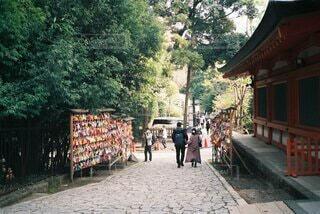 屋外,神社,樹木,人物,道,人,歩道