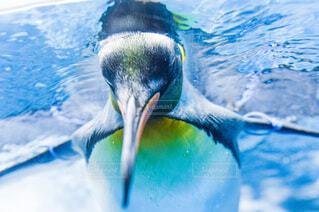 動物,鳥,青,水面