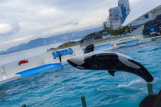 空,動物,屋外,水面,泳ぐ,海獣,クジラ