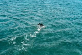 海,スポーツ,屋外,サーフィン,波,水面,マリンスポーツ,乗馬