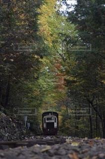 秋,紅葉,森林,屋外,森,電車,線路,樹木,景観,縦長,草木,10月,トロッコ,ディーゼルカー