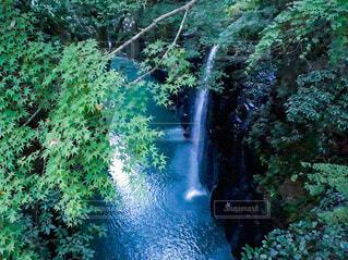 自然,風景,森林,屋外,緑,水,水面,滝,樹木,草木,高千穂峡