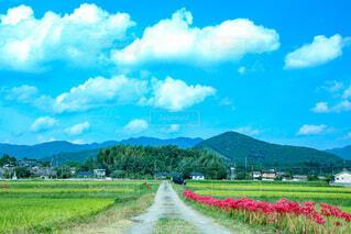 自然,風景,空,花,屋外,雲,青空,青,田舎,山,草,道,田んぼ,彼岸花,田,草木