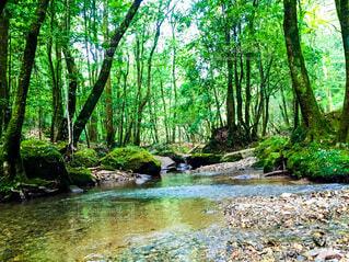 自然,風景,春,夏,森林,木,屋外,湖,緑,川,水面,水辺,景色,樹木,グリーン,summer,なつ,草木,ミドリ,水辺の森
