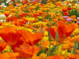 風景,花,景色,オレンジ,カラー,草木