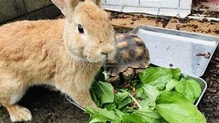動物,屋外,カメ,ウサギ
