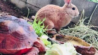 動物,屋外,草,カメ,ウサギ