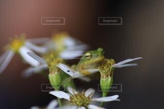 花,動物,カエル,蛙,両生類,かえる
