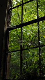 自然,屋内,植物,窓,オシャレ,日本,iphone,廃墟,蔦,福岡県,フォトジェニック,緑化,侵食,ホーム画面