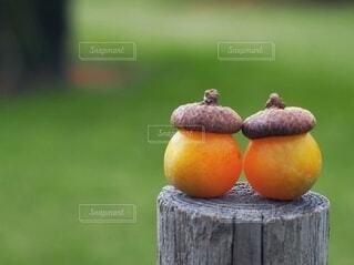秋,屋外,木の実,オレンジ,どんぐり,銀杏,木目,カボチャ,団栗