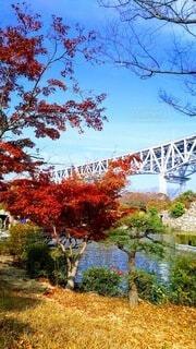 空,秋,橋,紅葉,屋外,もみじ,草,樹木,香川県,瀬戸大橋,草木