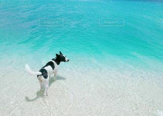 犬の写真・画像素材[226805]
