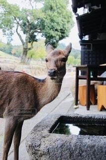 自然,動物,絶景,野生動物,木,水,景色,草,樹木,鹿,奈良,奈良公園,景観,野生