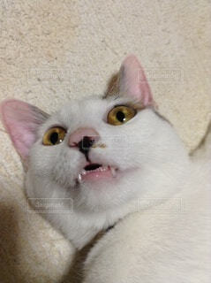 猫,動物,屋内,白,景色,子猫,ショック,驚愕