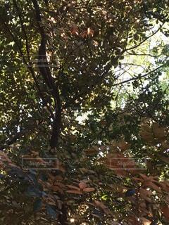 自然の写真・画像素材[252175]