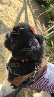 犬の写真・画像素材[253593]