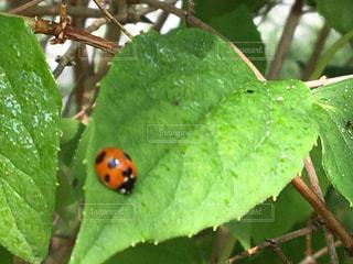 アウトドア,夏,自撮り,散歩,ハート,オリジナル,ハート型の葉っぱ,赤いてんとう虫