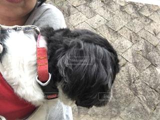 犬,アウトドア,散歩,川,横顔,初夏,オリジナル,抱っこ散歩