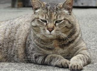 猫,動物,屋外,景色,座る,地面,cat,ネコ科,仏頂面
