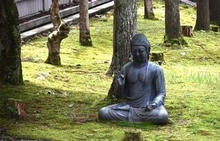 風景,屋外,草,樹木,像,仏像,彫刻,草木