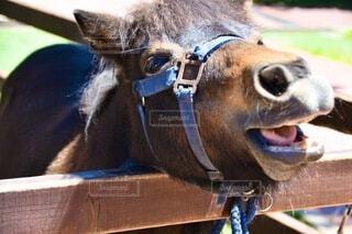 動物,屋外,牧場,馬,ポニー,horse