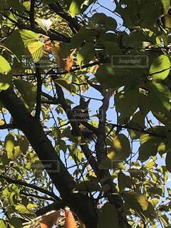自然,木,葉,リス,威嚇,りす,探し