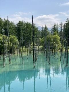 自然,空,青,池,樹木,美瑛