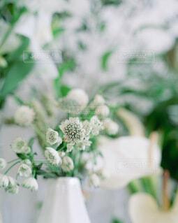 花,屋内,緑,花束,花瓶,草木
