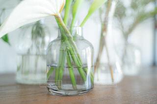 花,屋内,花瓶,ガラス,テーブル,ボトル,メイソンジャー,クリア,草木