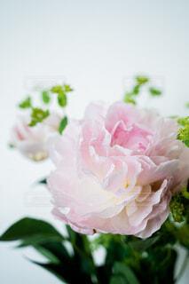 花,屋内,白,花束,草木,芍薬,シャクヤク