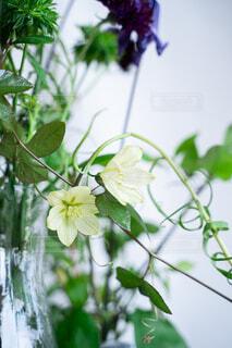 花,花束,草木,ボタニカル,おしゃれ
