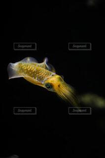 動物,魚,黄色,水族館,暗い,水中,金魚,イカ,海洋生物学