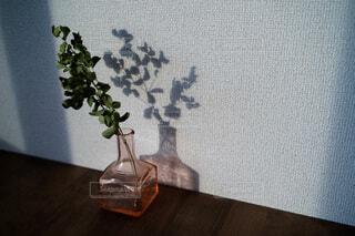 花,屋内,花瓶,アート,ドライフラワー,植木鉢,観葉植物,草木,ユーカリ