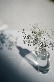 花,屋内,かすみ草,綺麗,花瓶